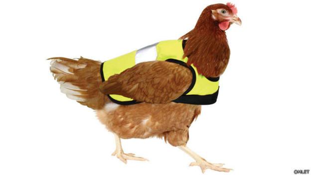 Fabrican abrigos para mantener calientes a los pollos en invierno