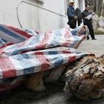 Condenan a millonario chino que electrocutaba tigres y se los comía