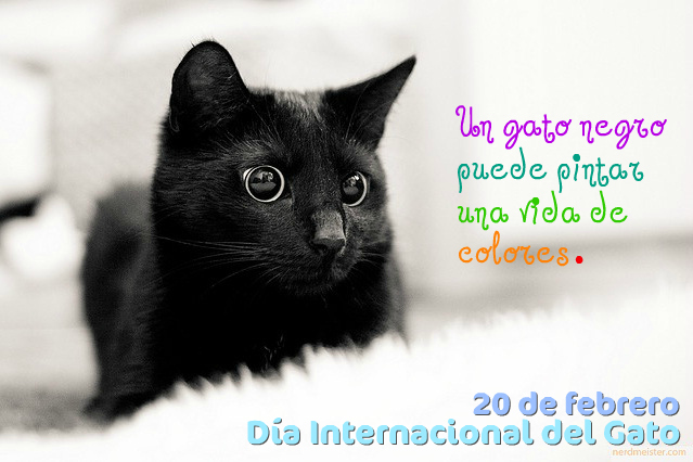 dia-internacional-del-gato