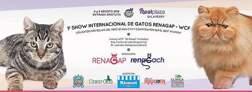 Primer Show Internacional de Gatos – RENAGAP – WCF