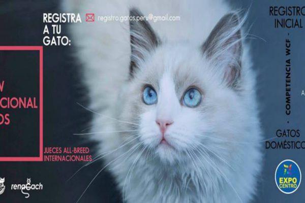 II Show Internacional Felino Renagap