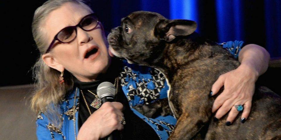 """El perro de Carrie Fisher se emocionó cuando la vio en """"Star Wars: Los últimos Jedi"""""""
