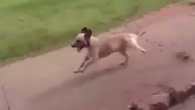 Perro persiguió ambulancia en la que llevaban a su dueño